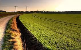 У сільгосптовариства відберуть землі