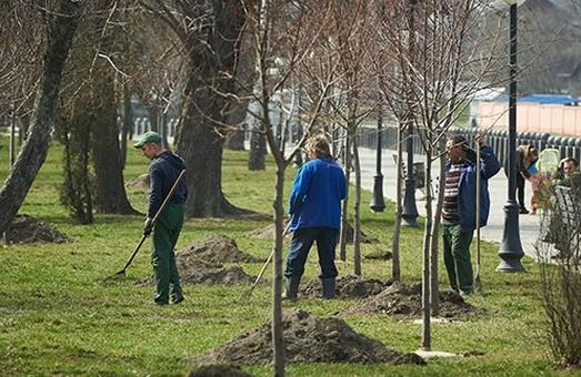 Дерева в центрі Харкова поливають за допомогою прикореневої системи поливу
