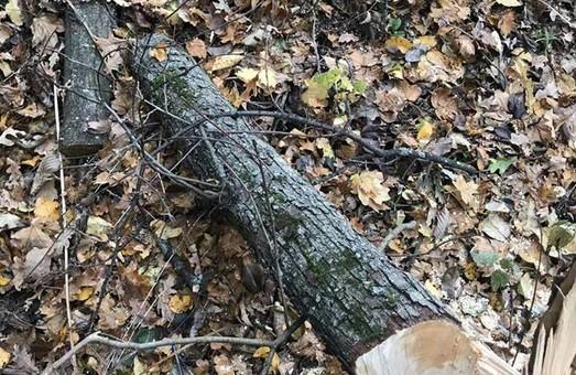 Селянина спіймали на порубці лісу