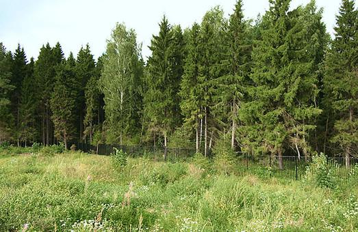 Прокуратура поставила питання про відповідальність особ, які дозволити приватизувати громадянці лісовую ділянку