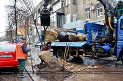 В Харкові стане на дві тисячі дерев більше