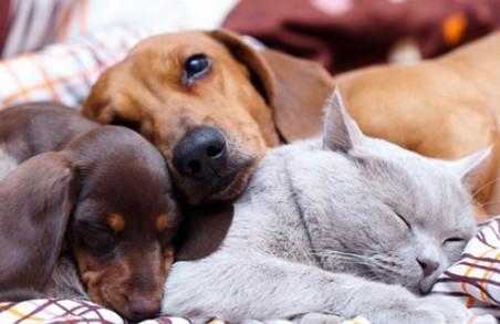 Як працюватиме податок на домашніх тварин в Україні - подробиці