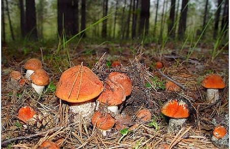 Наші прокурори чомусь не вірять, що селяни збирають гриби з бензопилами