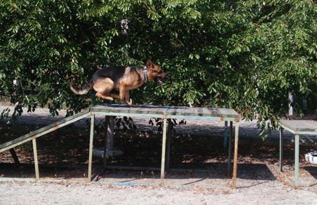 Собаки патрулюватимуть вулиці Харкова