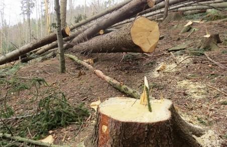 На Харківщині затримали крадіїв лісу