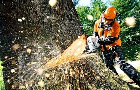 На Харківщині викрили шахрайську схему із захоплення лісу