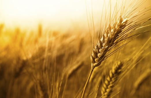 Аграрії Харківщини зібрали рекордний урожай пшениці