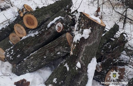 На Харківщині був затриманий чоловік за незаконну вирубку дерев