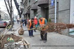 У Харкові стане більше дерев