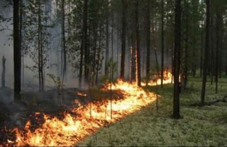 Рятувальники попереджують харків'ян про надзвичайний рівень пожежної небезпеки