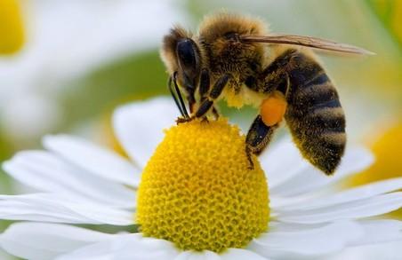 На Харківщині сталася масова загибель бджіл