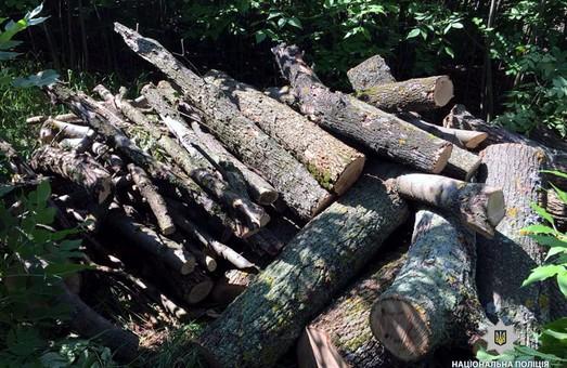 На Харківщині знов була зафіксована незаконна вирубка лісу