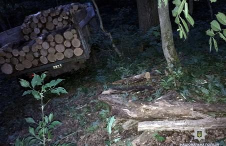 На Харківщині знов незаконно вирубували дерева