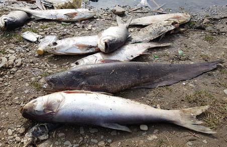 На Харківщині масово мре риба