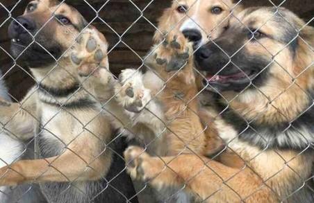 У Харкові знову напали на притулок для тварин