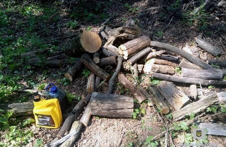 На Харківщині чоловік нарубав дерев майже на 66 тисяч гривень
