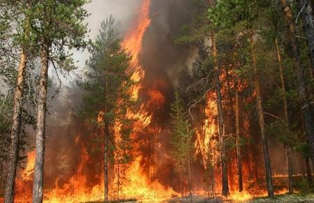 В харківських лісах знизилась кількість пожеж