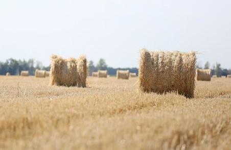 Урожай ранніх зернових і зернобобових культур на Харківщині склав понад 2,3 млн тонн