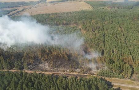 На Харківщині загорілося лісове господарство (фото)