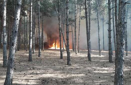 В харківському лісі загорілася хвойна підстилка