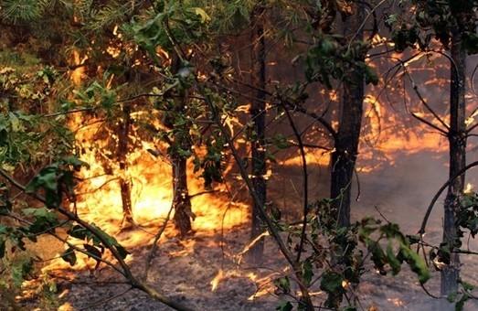 В лісах Харківщині залишитись ще три осередки загоряння