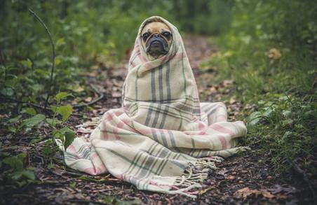 Завтра харків'ян чекає прохолодна погода