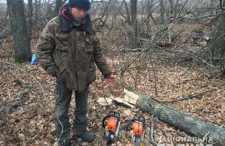 На Харківщині незаконно вирубали дерева