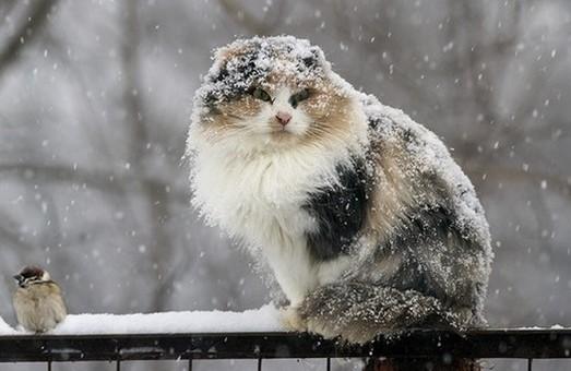На Харківщину суне небезпечний циклон