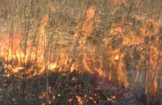 Випалювання трави та сміття призвело до 30 пожеж на Харківщині
