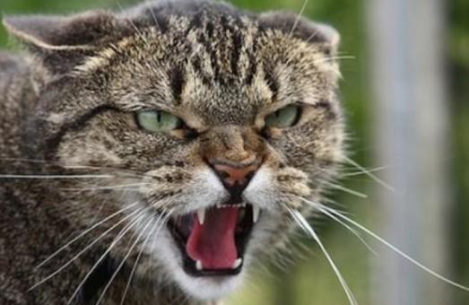 В одному з районів Харкова ввели карантин через скаженого кота