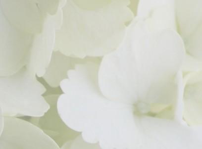 В Харкові стартує «квіткова» виставка
