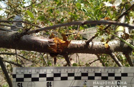 На Харківщині на подвір'я будинку була кинута граната