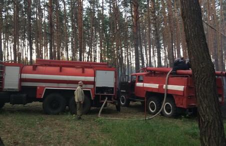 На Харківщині загорівся ліс