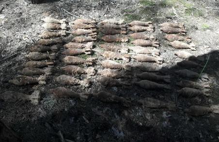 У лісовому масиві під Харковом виявлено 101 застарілу мінометну міну