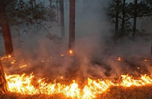 Харків'ян попередили про пожежну небезпеку