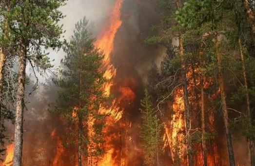 У поточному році в лісах Харківщині сталося 8 пожеж