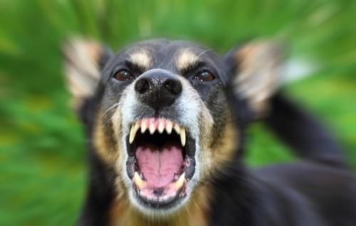 На Харківщині собака покусав дитину