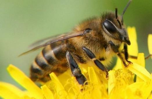 На Харківщині отруїли бджіл