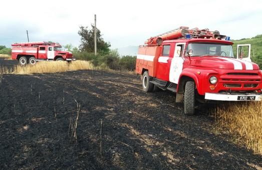 Під Харковом пожежа сухостою завдала шкоди хлібному лану