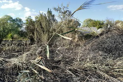 На Харківщині сталося 26 природніх пожеж