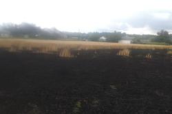 На Харківщині загорілося пшеничне поле