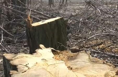 Харківського лісника, який розповів Зеленському про лісову мафію, звільняють