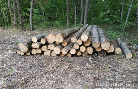На Харківщині – нові випадки незаконної вирубки дерев