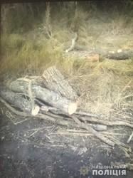 На Харківщині виявляють факти незаконної порубки лісу