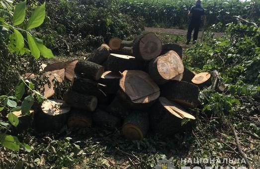 Поліцейські припинили викрадення деревини ще в двох районах Харківщини (ФОТО)