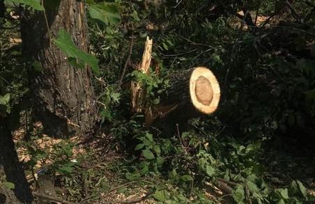 Впевнений: ми посадимо не тільки дерева – Чагаровський