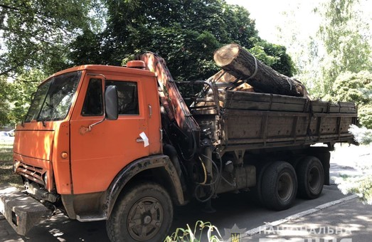 В Харкові знов незаконно вирубали дерева