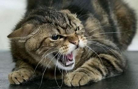 В Харкові виявили скаженого кота