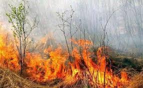 Харківські вогнеборці здійснили 25 оперативних виїздів на гасіння сухої трави, стерні, очерету та сміття