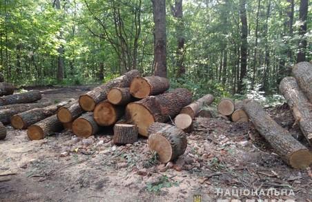 Розслідуванням справи «чорних лісорубів» на Харківщині займається ДБР